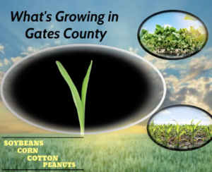 Cover photo for What's Growing in Gates County