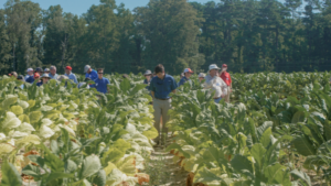 Cover photo for Organic Commodities Field Day   August 4, 2021   Goldsboro, NC